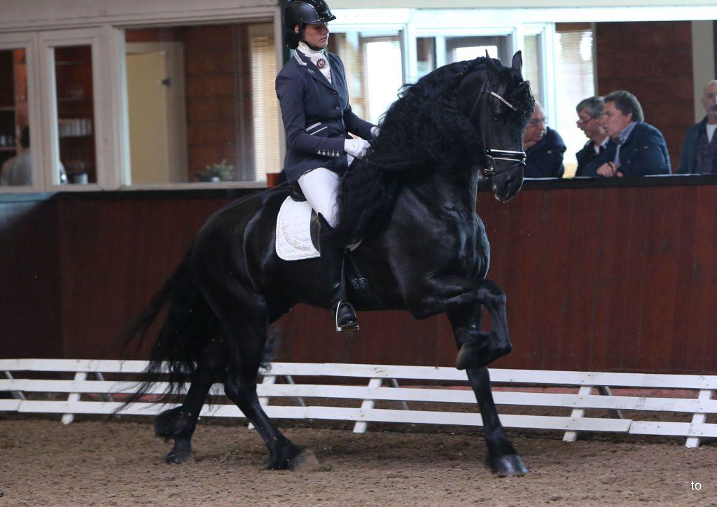 "Geert van de Noeste Hoeve, Ster & Sport""-Elite Vader: Maurits x Feitse Geb. 16-02-10 Sport Mennen * Z-1 Enkelspan Dr. paard ZZ+"
