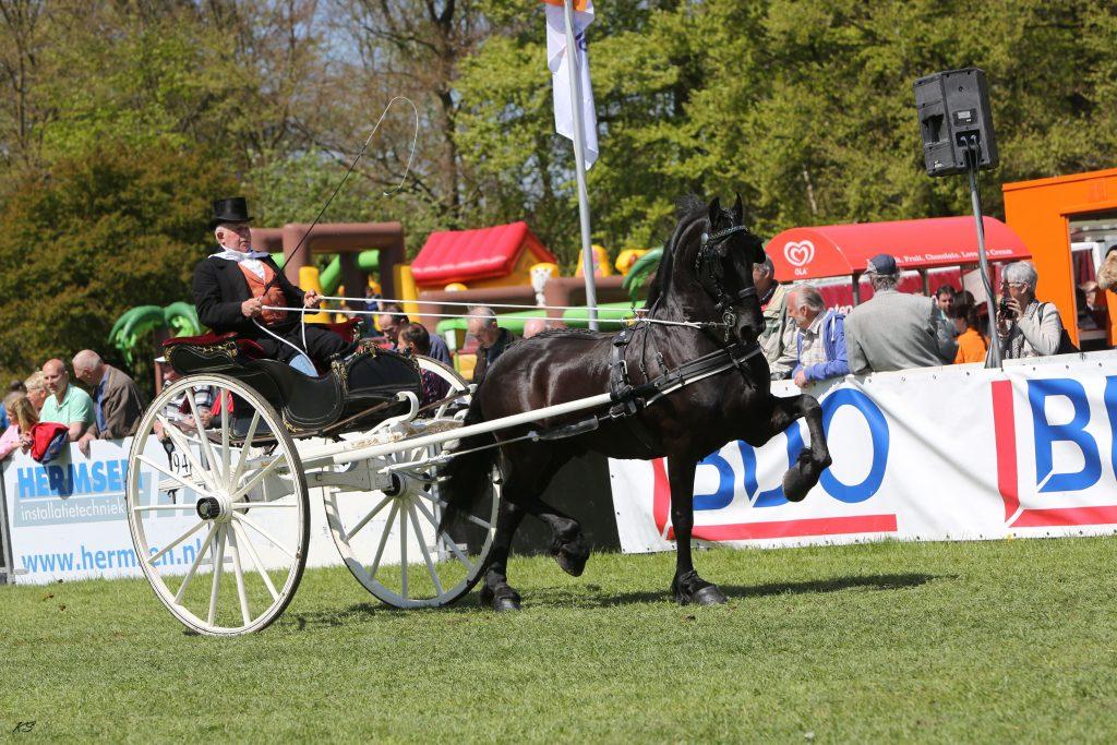 Sold / Verkocht  Ulbe van de Noeste V. Beart x Nanno Geb. 23-03-2006 ( Hoeve Kampioenschappen/Competities: 2015: Kampioen tweespan regionaal 2014: Winnaar Young Riders competitie (met Nadia den Hollander)