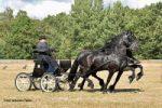 Sport paarden Geert &  Ulbe van de Noestehoeve winnen in Assen