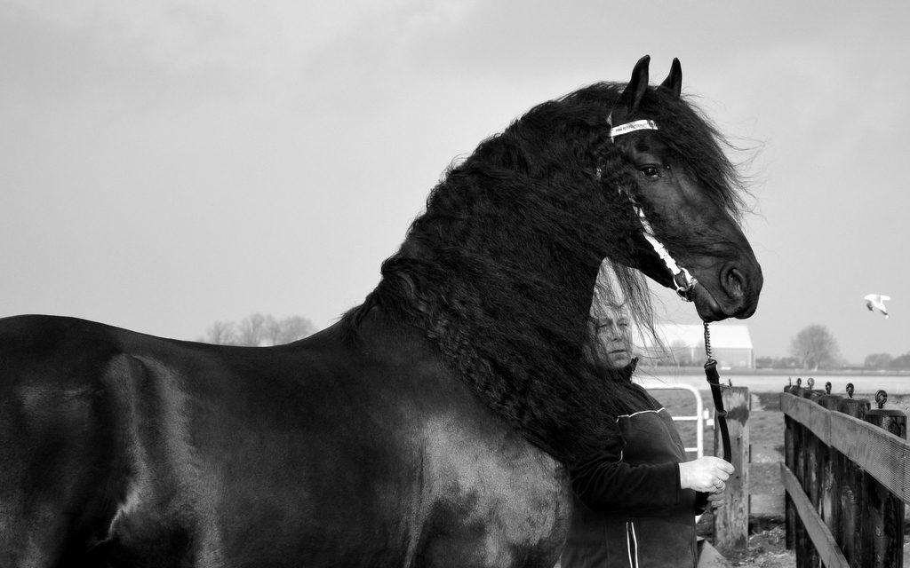 Sold - Kije van de NH, v, Dries x Feitse, Geb. 02-06-2011 Dressuur paard Z2+1 10-2-2018 Z2+1 10-2-2018 Enkelspan Dr. paard ZZ+40 29-6-2018 ZZ+40 4-8-2018
