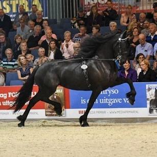 JOCE FEMKE VAN DE NOESTE HOEVE : Model + SPORT - Elite V. Tsjalle x Feitse . Geb. 05-02-2011 Dressuur paard Z1+6 Mennen ZZ+11 V. Tsjalle x Feitse Zie Link http://www.friesetuigpaard.nl/friesland/nieuws/587/